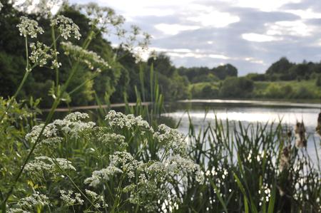 hemlock: Estanque rural al atardecer en el verano detrás de los arbustos y flores silvestres Foto de archivo