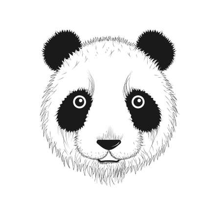 Drawn portrait of a Panda. Vector illustration in black and white.
