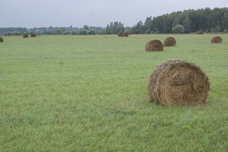 Hay stacks on the meadow