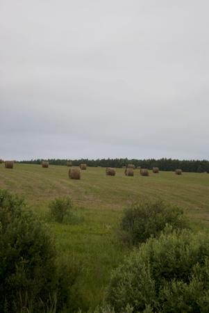 Plenty of hay stacks in the meadow