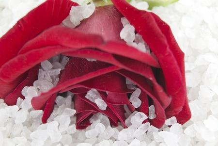 Red rose on spa salt