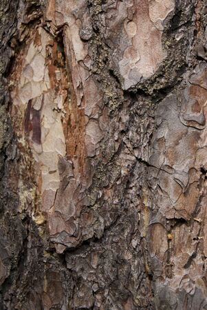 Pine bark shown as a background Stock Photo