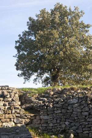 wornout: Old wornout wall in the hill and a tree in the place of Troy, Turkey Stock Photo