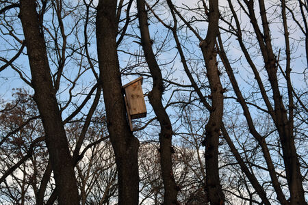 Side view of a birdhouse in spring, on the trunk