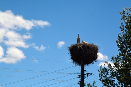 Couple of storks in a nest on a lamp post