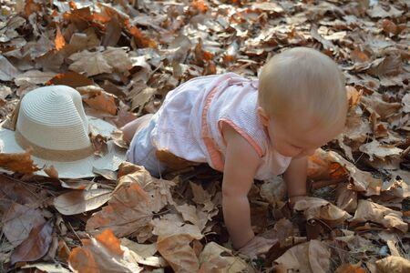 bebe gateando: Un bonito beb� gateando en hojas de oto�o y explorarlas