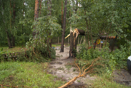 toppled: broken branches and trees after the hurricane