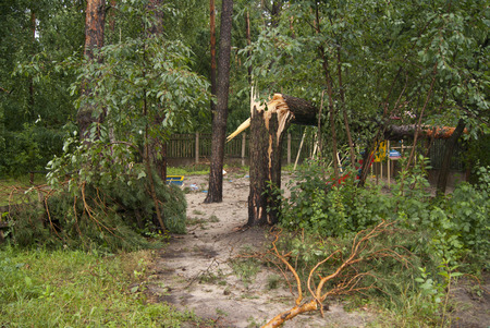 toppled: Broken trees after the hurricane