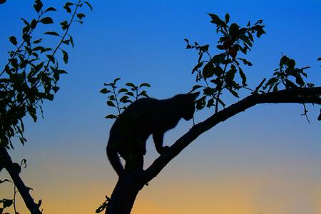 arbres silhouette: Kitten sauter sur un tronc de l'arbre