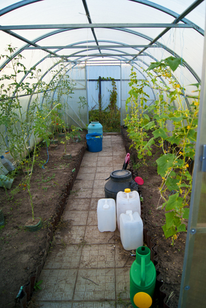 tins: inside the greenhouse, with plastic tins and copntainers Stock Photo