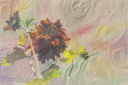 ruffle: ruffle paper background with a brown sunflower and watercolor stains