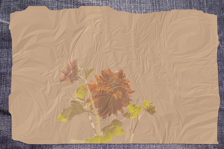 ruffle: background with a brown sunflower and ruffle paper with jeans Stock Photo