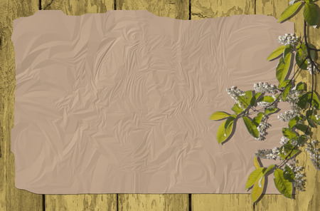 ruffle: Ruffle paper background with cherry in blossom over wood