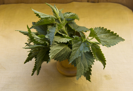 fresh nettle leaves for cooking purposes