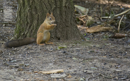 small squirrel at the tree trunk Stock Photo