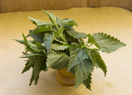 fresh nettle leaves in the jar, for cooking