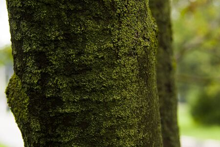 green mossy tree trunk in the forest Stock Photo