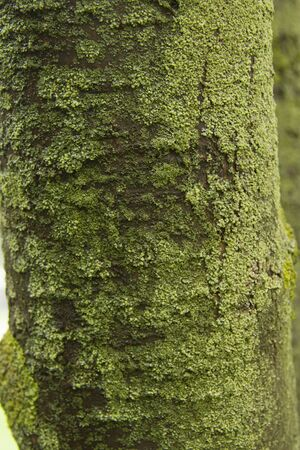 green tree trunk with moss, in rainy weather