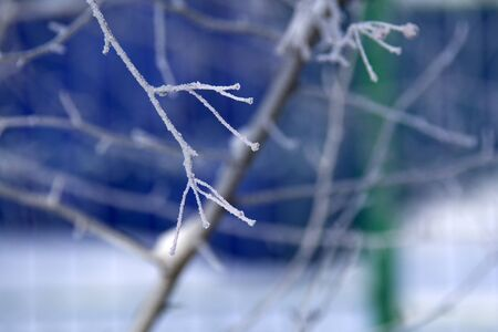frozen branch with snow on the blue background