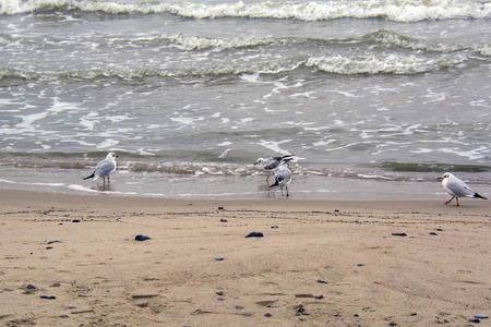 seagulls on the beach, next to the stormy water