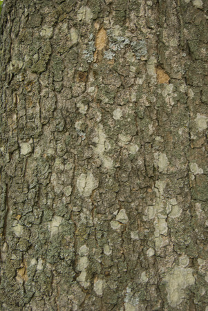 rough tree bark, closeup Stock Photo