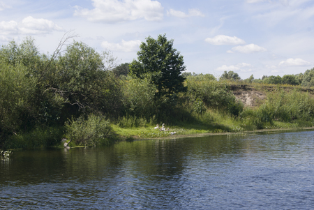 Stryzhen river in summer, with the geese on the bank