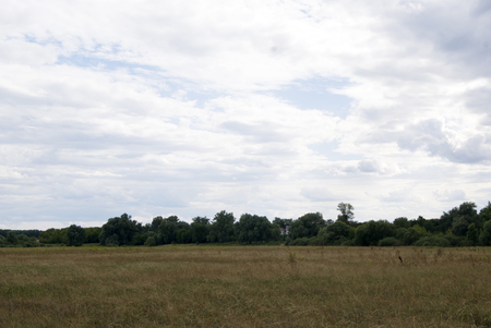 Meadow with yellow grass and trees, in cloudy weather