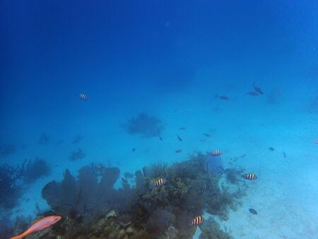 vista subacquea di una grande barriera corallina con piccoli pesci