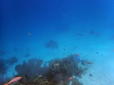 Vista submarina de un gran arrecife con peces pequeños.