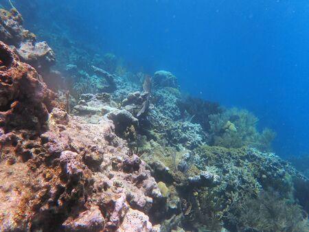 pendiente sobre el agua, con corales y peces pequeños en el lejano