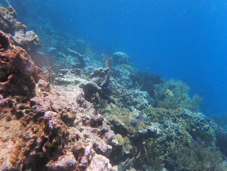slope on water, with corals and small fish in the far
