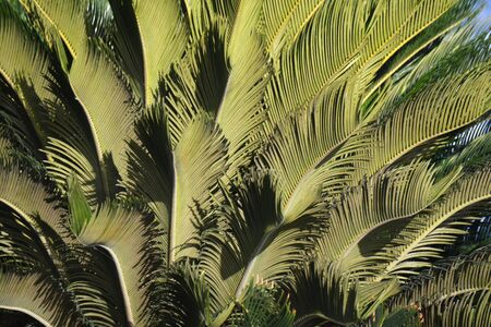 several bright palm leaves under the sun, as a background