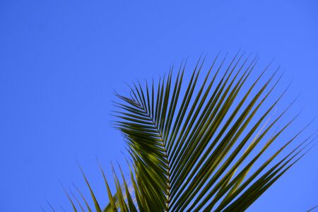 tip of the palm leaf, over the blue sky