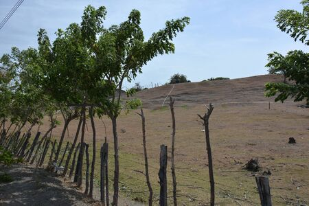 fence along the farm with trees grown from sticks