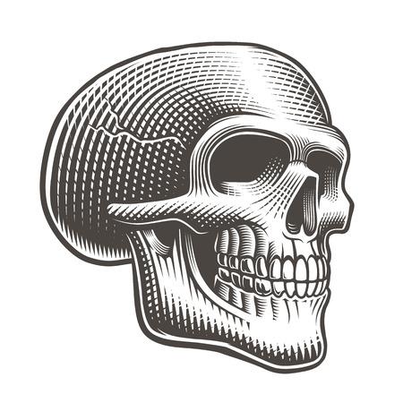 Illustration vectorielle d'un profil de crâne dans le style de tatouage sur fond blanc