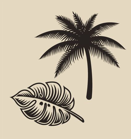 Illustration of palm tree and monstera leaf on a white background