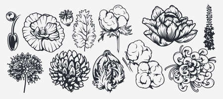 A set of illustrations on a floral theme. Can be used as an element of design, background, decoration, printing on fabric, and for many other uses Illusztráció