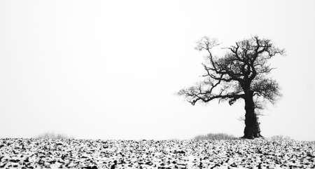mud and snow: Tree