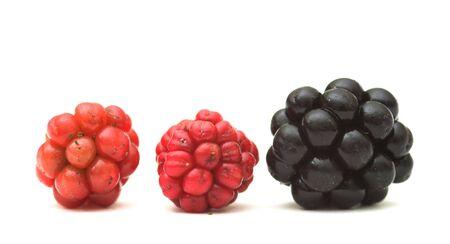 Raspberries Stock Photo - 550349