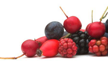 Winter Berries Stock Photo - 550344