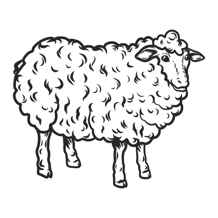 Sheep icon. Hand drawn illustration of sheep vector icon for web design Ilustracja