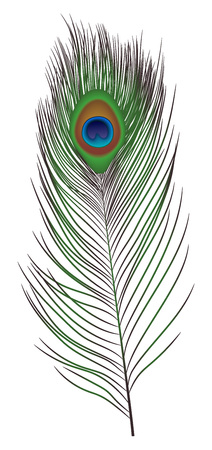 Peacock feather icon. Realistic illustration of peacock feather vector icon for web design isolated on white background