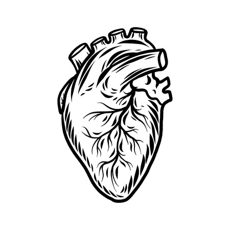5276 Anatomical Heart Cliparts Stock Vector And Royalty Free
