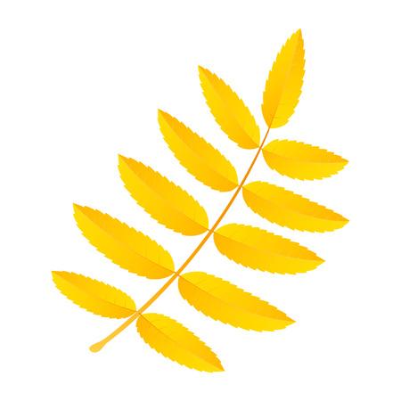Yellow rowan leaf icon. Flat illustration of yellow rowan leaf vector icon for web design