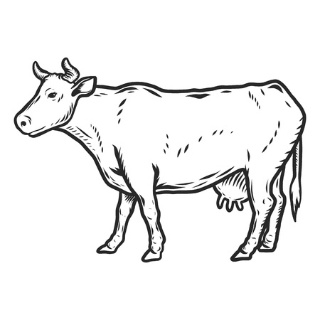 Cow icon. Hand drawn illustration of cow icon for web design