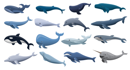Whale icon set. Cartoon set of whale vector icons for web design Standard-Bild - 111624011
