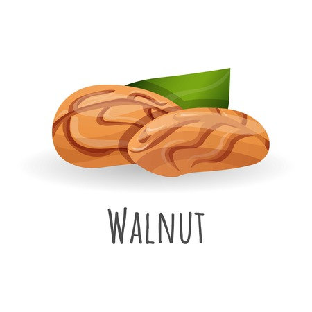 Walnut icon. Cartoon of walnut vector icon for web design isolated on white background