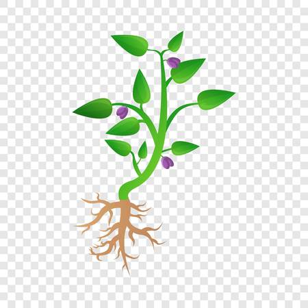 Soybean plant icon. Cartoon of soybean plant vector icon for web design for web design Vettoriali