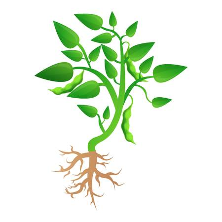 Soybean plant grow up icon. Cartoon of soybean plant grow up icon for web design isolated on white background