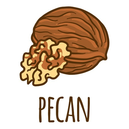 Pecan icon. Hand drawn illustration of pecan vector icon for web design